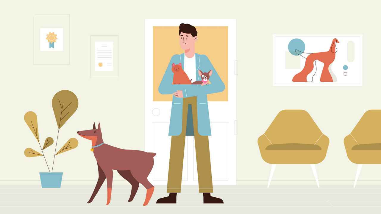 Pets in Animated Explainer Video