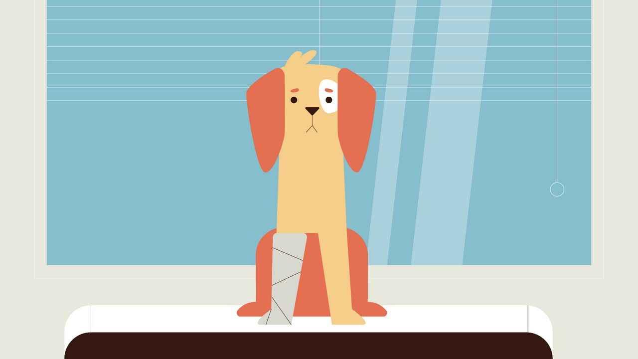 Vera Icon Explainer Video | 2D Animated Video
