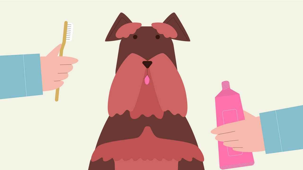 Dog care | 2D Animation