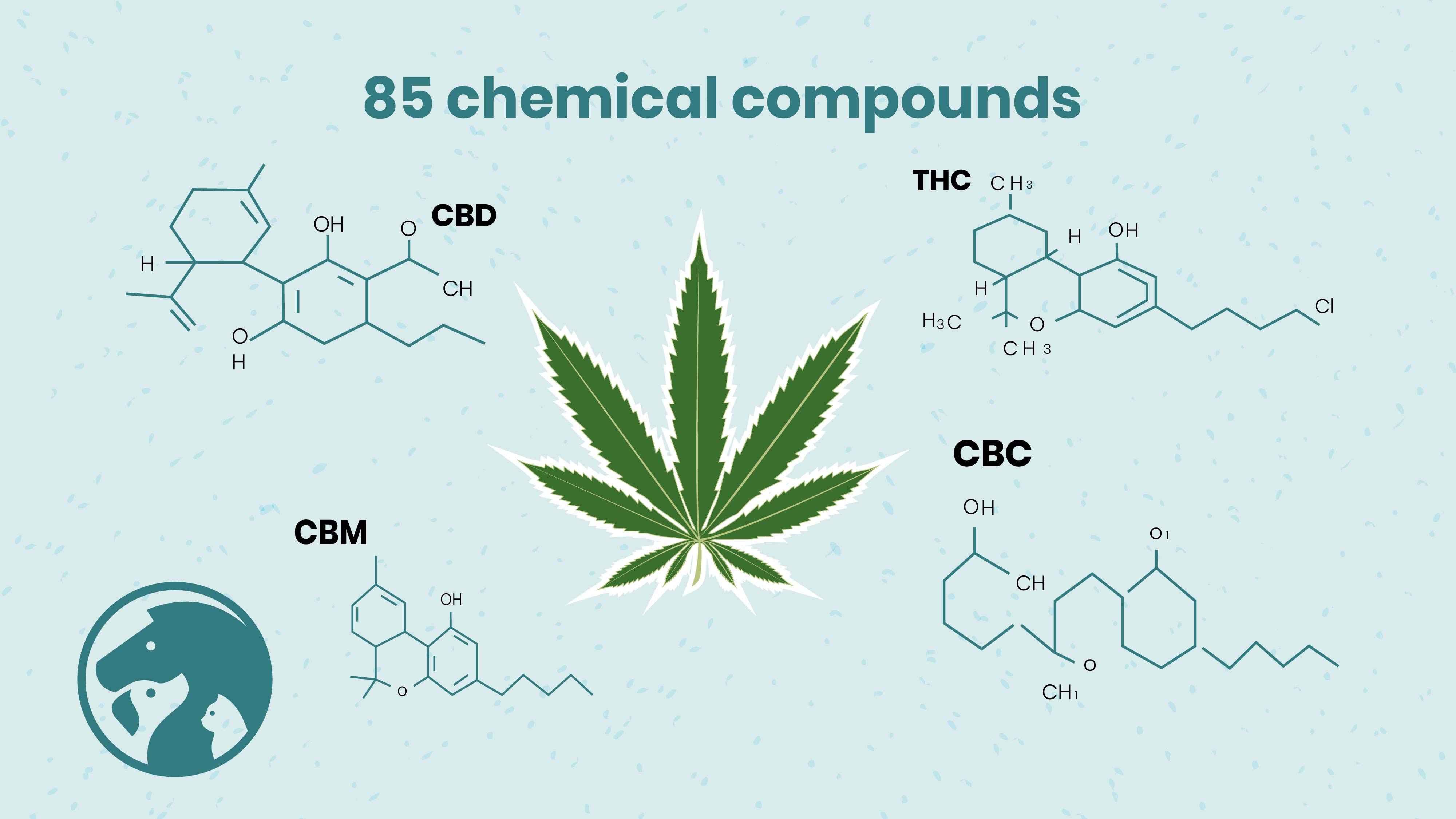 Cannabis - 2D Animated Video