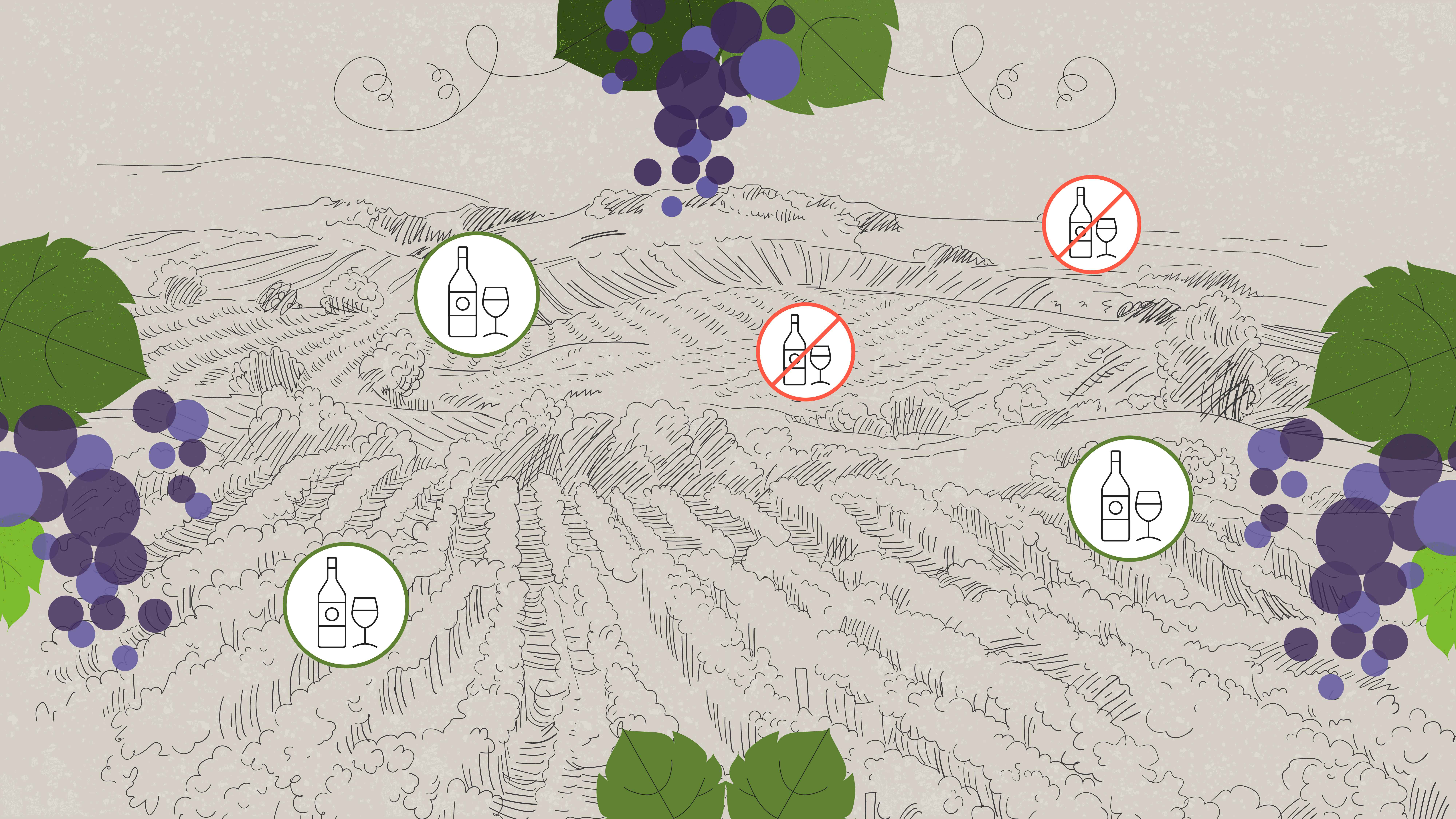 Selection of grapes for wine in Product Video